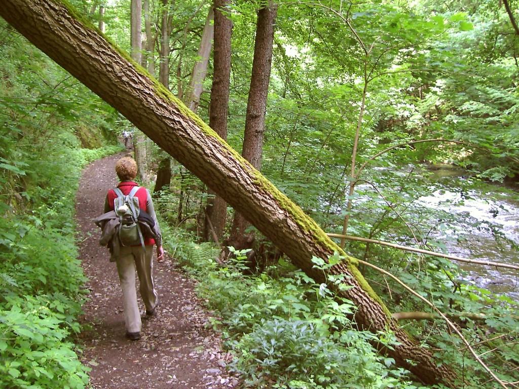Frau auf Wanderweg im Wald